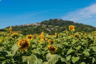 Hill of Sancerre Wine District, France
