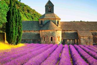 Lavender Fields Gordes, Luberon, Vaucluse, Provence, France