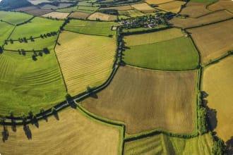 farmland, wheat crops