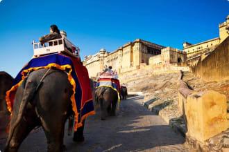 Elephants in Jaipur, India