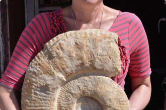 Morocco Ammonite Paleontology