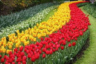 Keukenhof Garden, Tulips, Netherlands