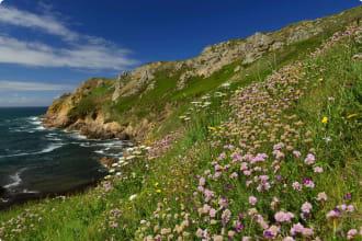 Le Pulec Wildflowers, Jersey, U.K.