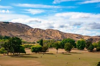 Dry hills and farmland of Martinborough