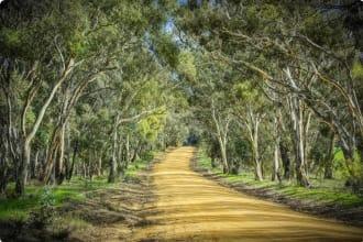 bush in rural Victoria near Benalla