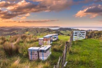 New Zealand beehives
