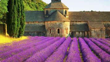 Provincial France Lavender
