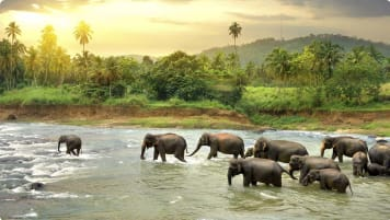 Sri Lanka small group
