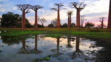Madagascar small group tour