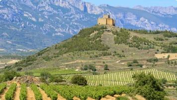 Vineyard with Davaillo castle as background, La Rioja (Spain)