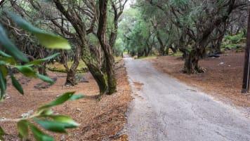 Olive forest, Corfu