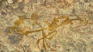 Aboriginal art Kakadu