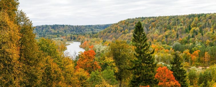 The Gauja River