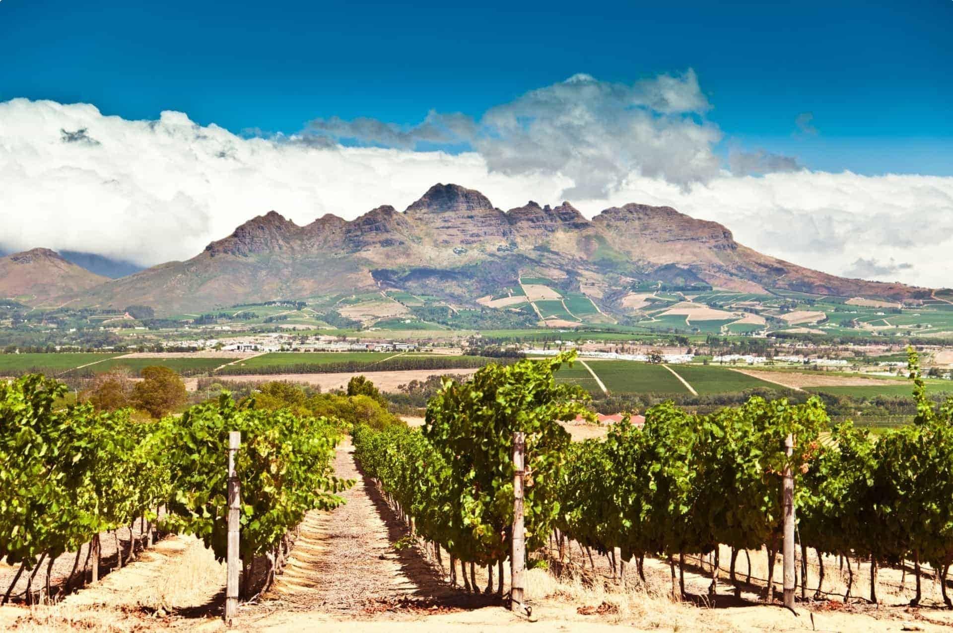 Stellenbosch vineyards South Africa