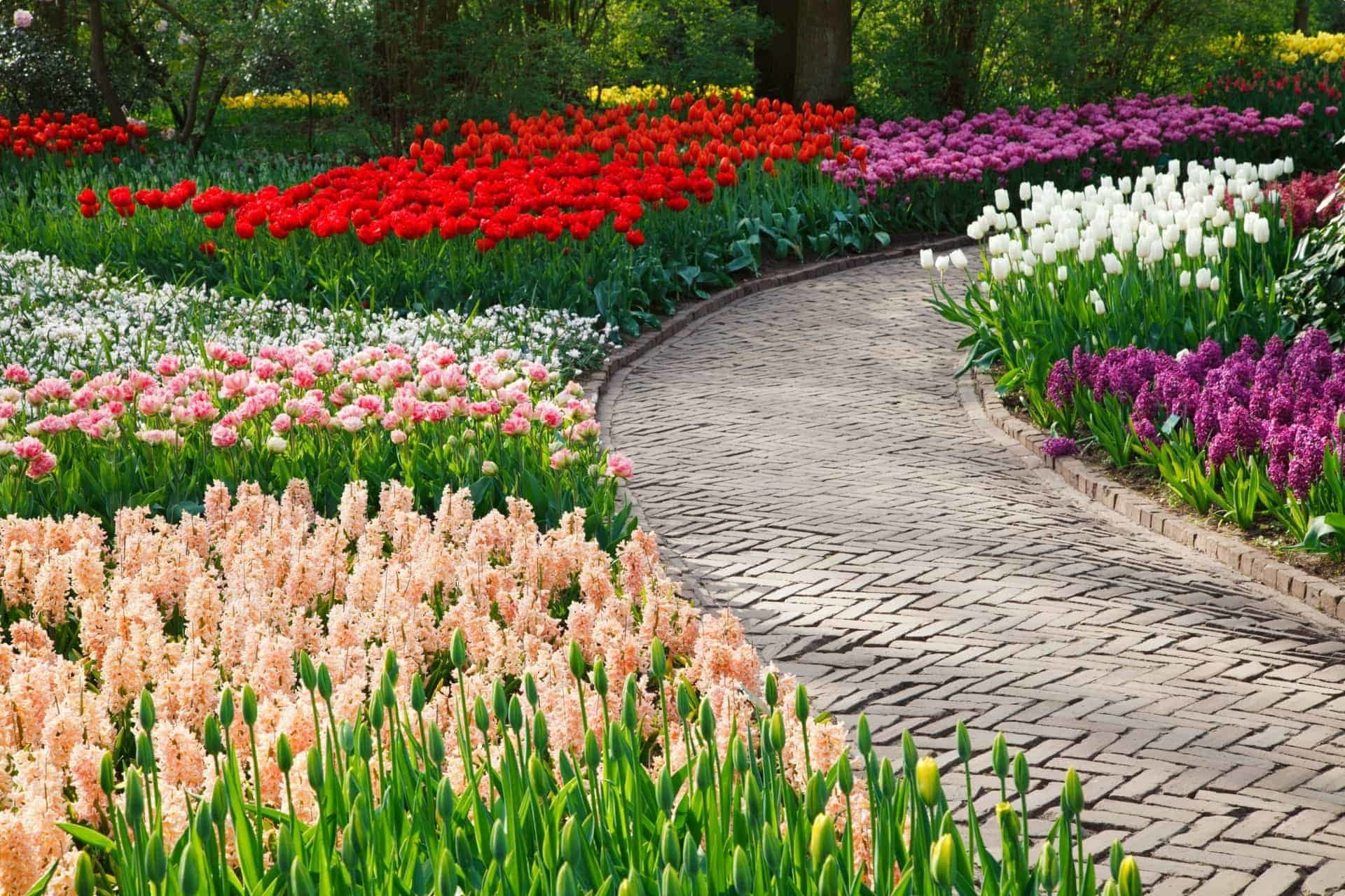 Tulips in Holland small group tour