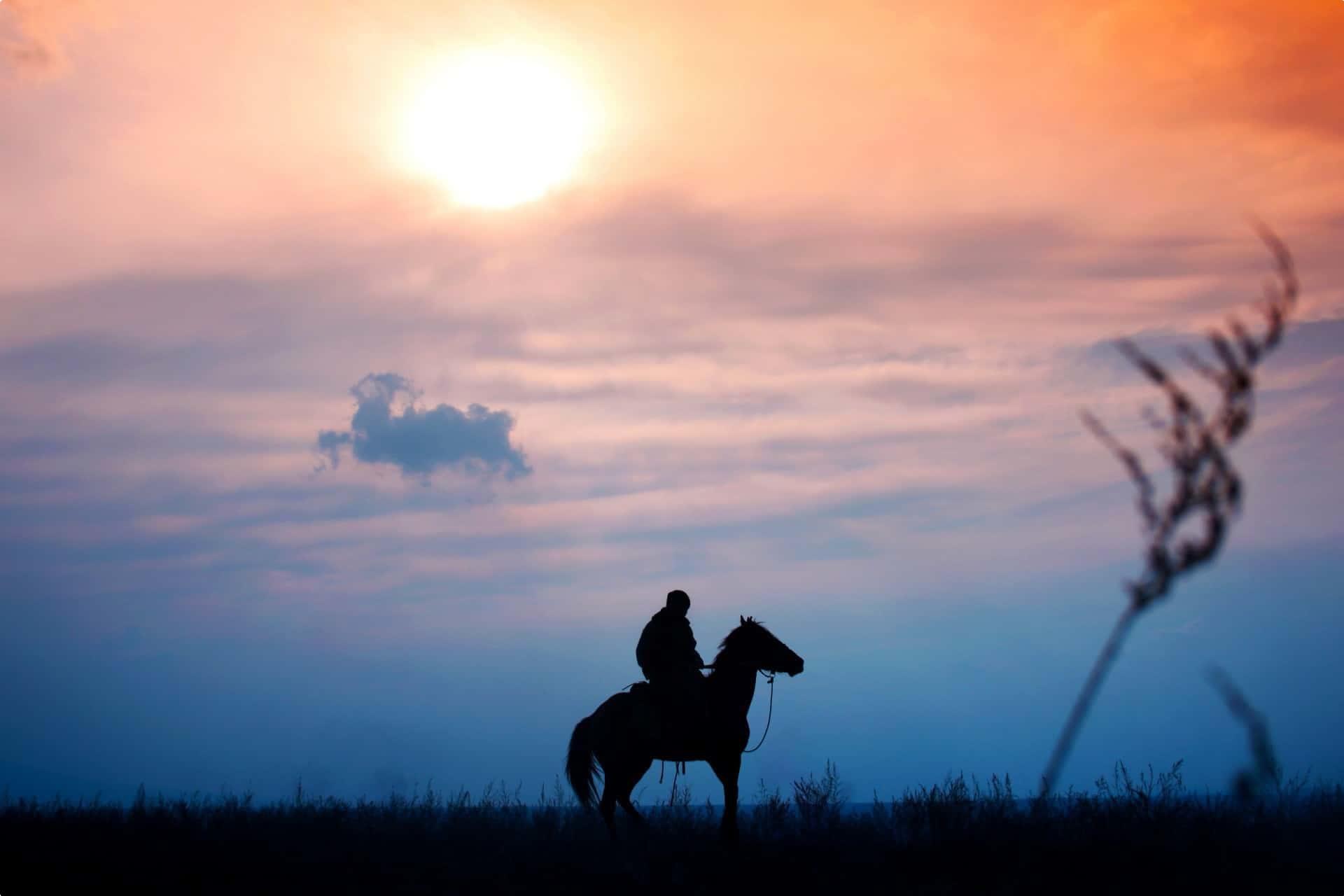 Kazakhstan Horse