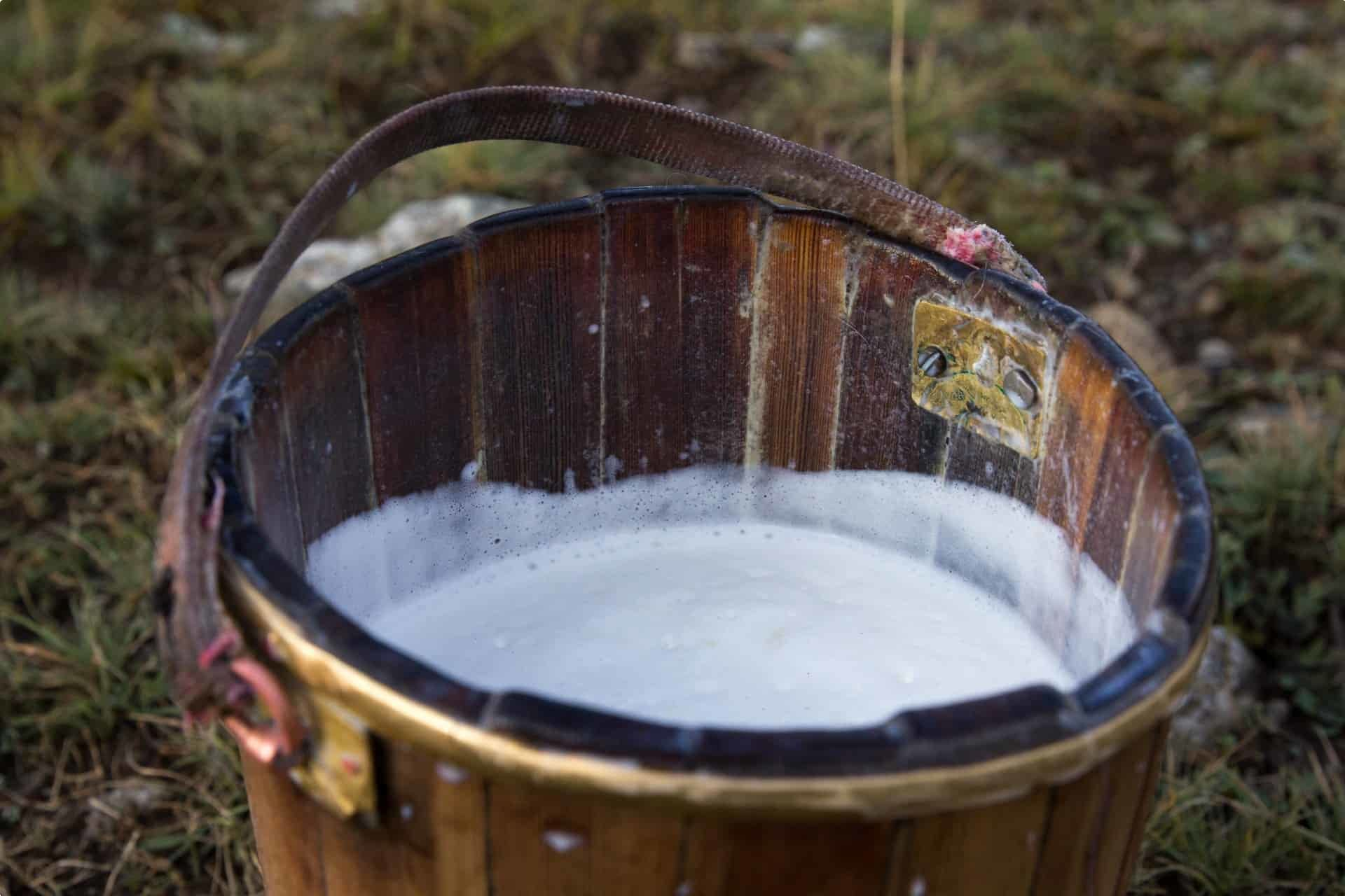 Yak milk, a staple in Mongolia