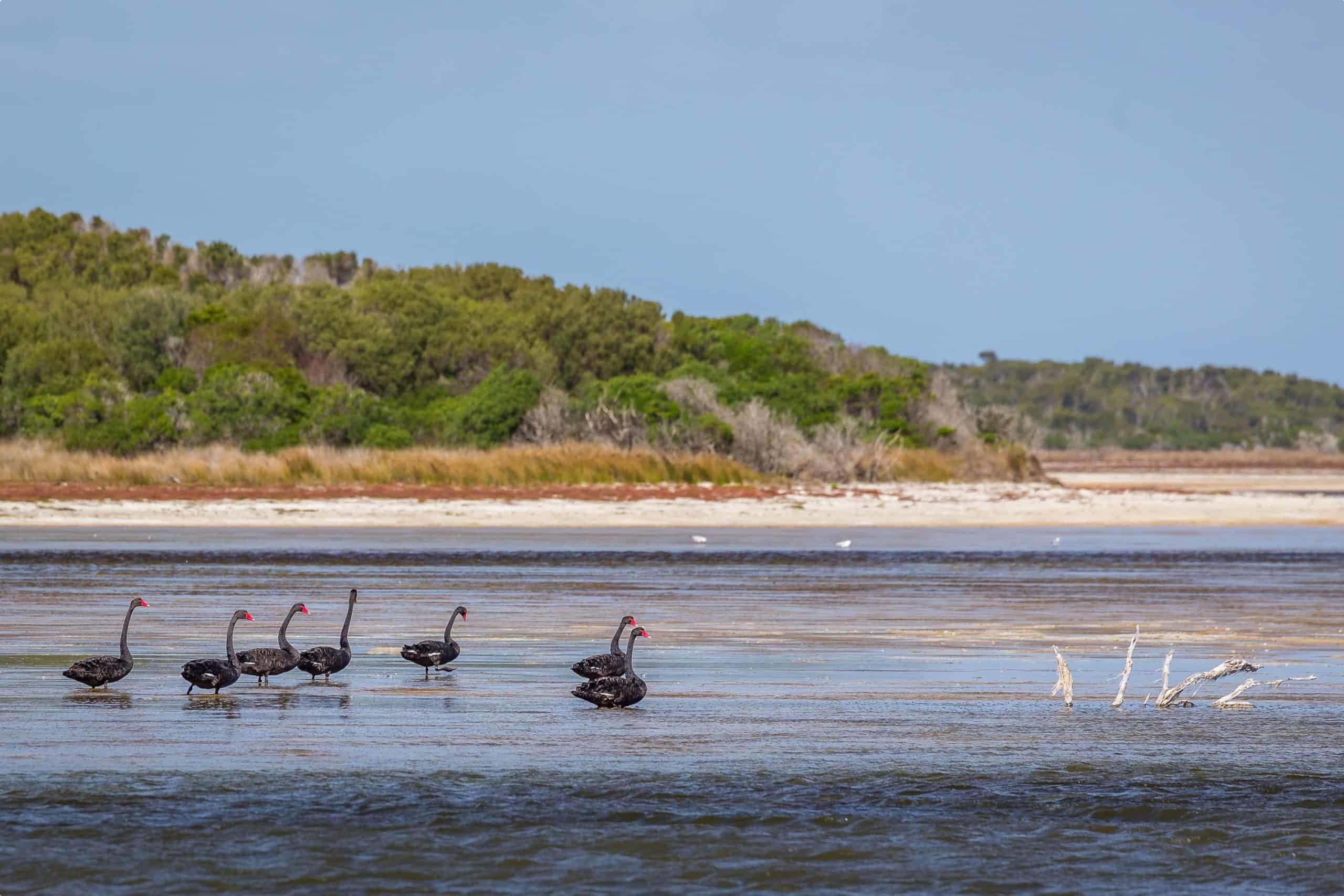 Flinders Island wetlands
