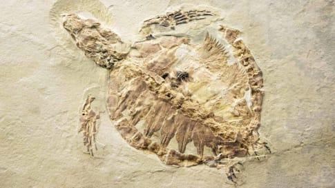Gobi Desert Mongolia Dinosaur dig