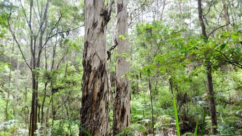 The Bibbulmun Track, Western Australia
