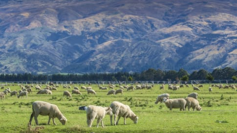 The McLean Family, shaping New Zealand landscapes