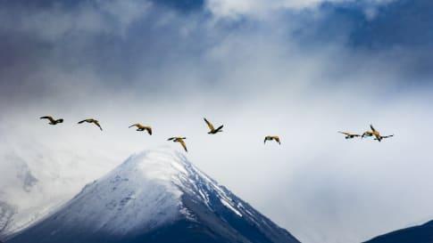 New Zealand Wildlife