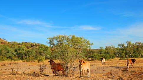Pastoral Pioneers of the Kimberley, Western Australia