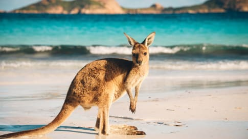 Iconic Animals of the Australian Outback