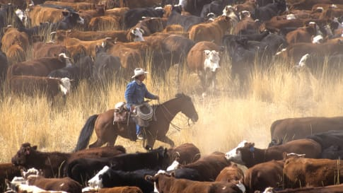 Alexander Forrest & Early Development of the Kimberley Cattle Industry