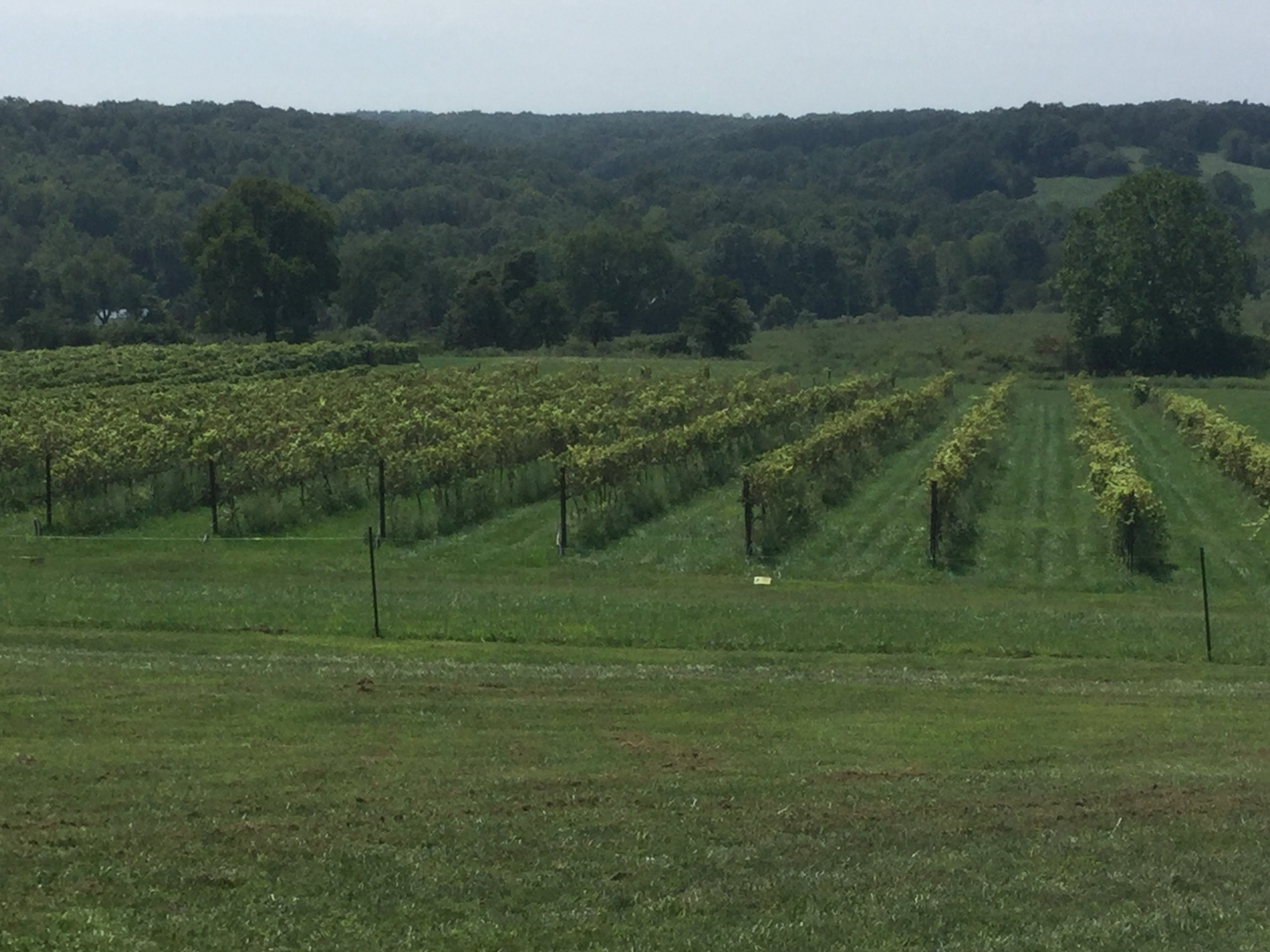 Ozarks Vineyard, Bed & Breakfast