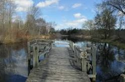 wooden bridge over marshy area with trees in background
