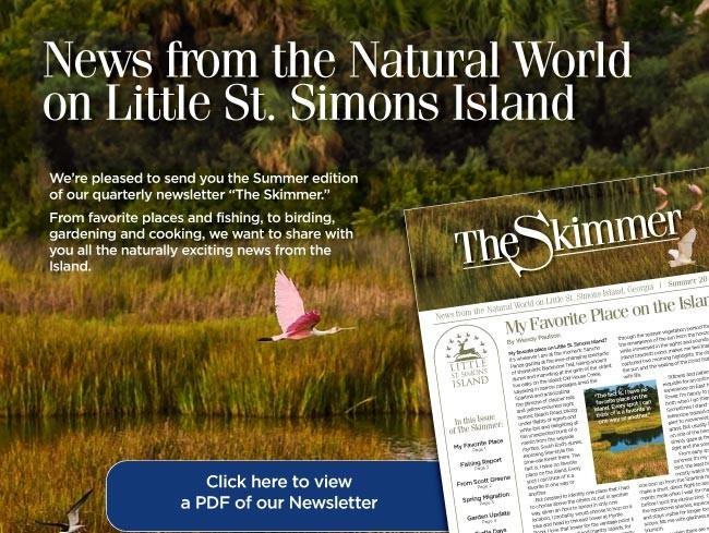 Summer 2016 Skimmer