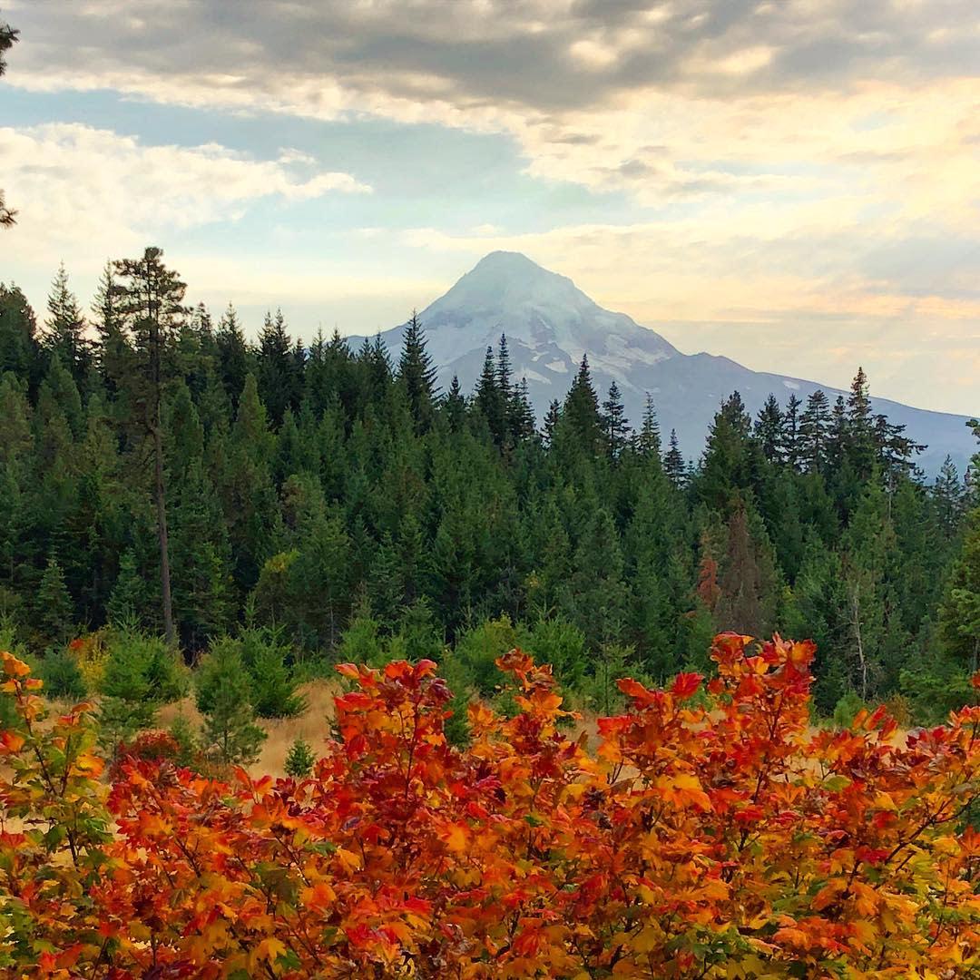 Oak Ridge Fall