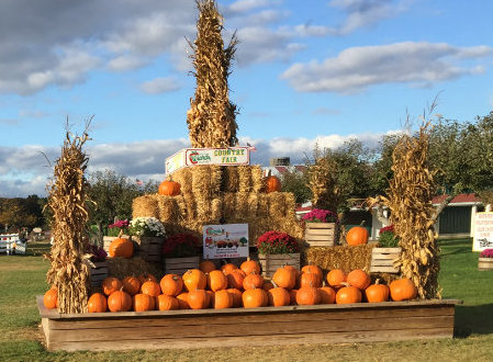 wiards orchard pumpkins