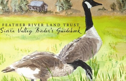 Feather River Birder Guide Book Cover