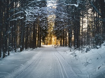 Winter Forest Road covered in snow