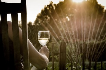 Person holding wine glass sitting in front of vineyard or garden