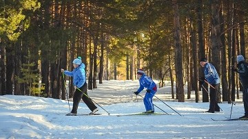 people cross country skiing in snowy woods