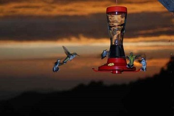 Hummingbirds feeding at a feeder with the sun setting over the Shenandoah Valley