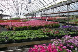 Finger Lakes Gardening
