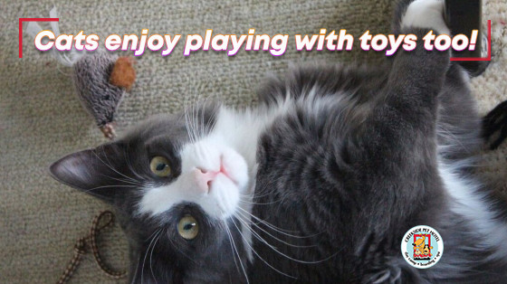 black and white cat playing with toy