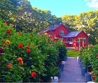 Endless Summer Flower Farms