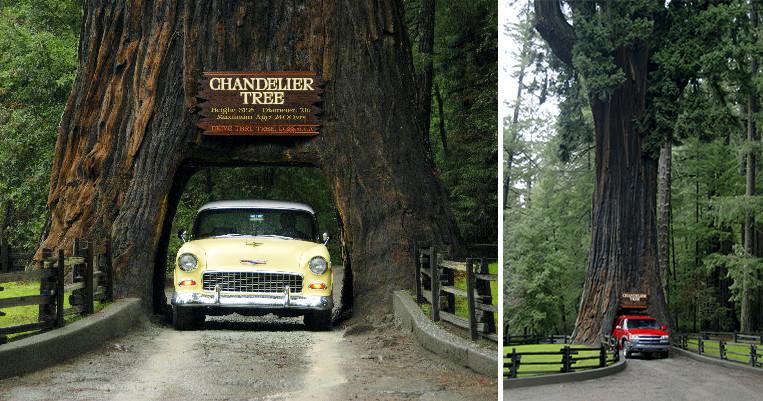 Chandelier Walk Through Tree