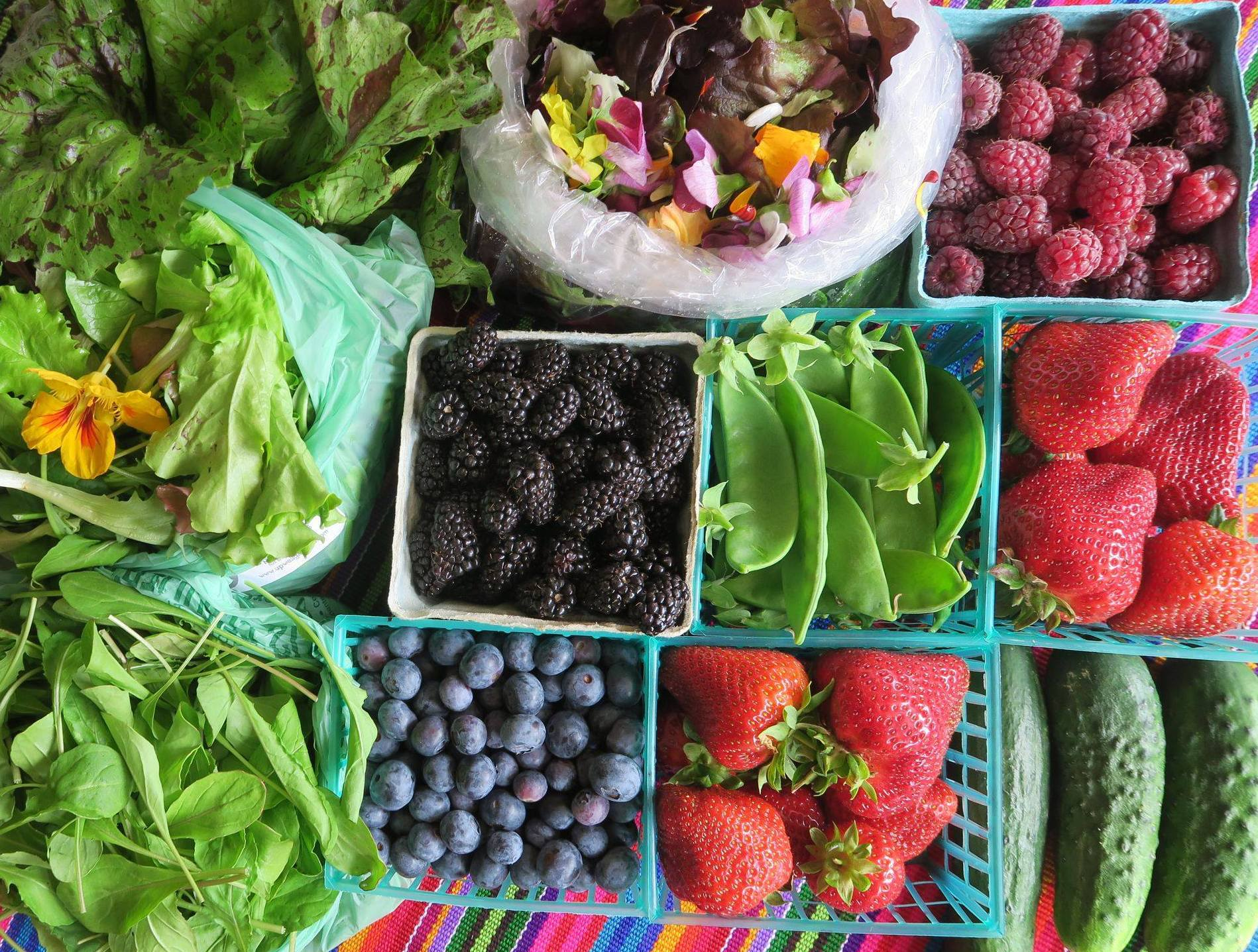 Mendocino Farmer's Market