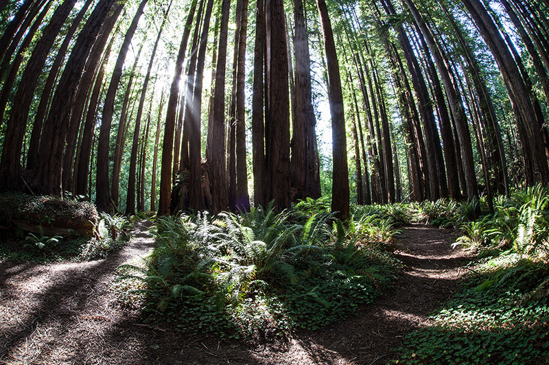 Mendocino Cost Redwood Forest