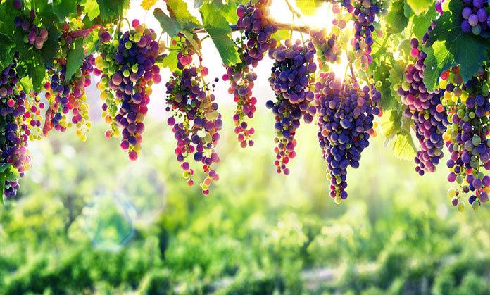 Anderson Valley Wine