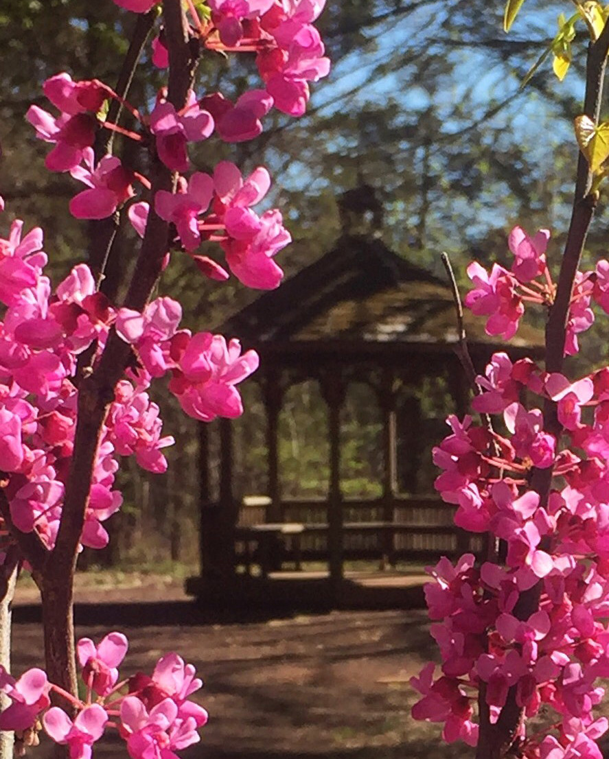 gazebo in background with 3 branches with pink flowers in foreground
