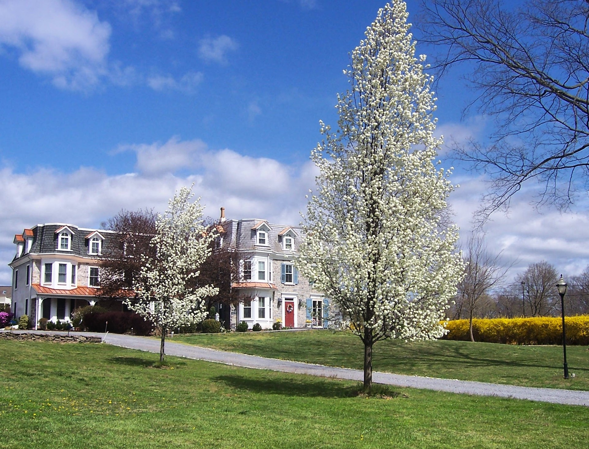 long view of house with white spring trees and blue sky with one white fluffy cloud