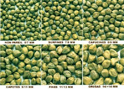 Caper sizes