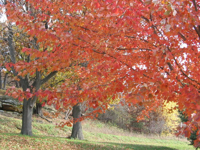 Autumn Magic Along Military Ridge Trail >> About Us Cameo Rose Victorian Country Inn